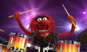 drummers-animal